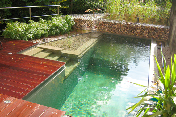 Natural Swimming Pools 9 Myths Busted Memphis Germantown Collierville Homes For Sale Your