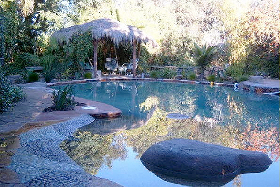 Natural swimming pools 9 myths busted memphis for Making a natural pond